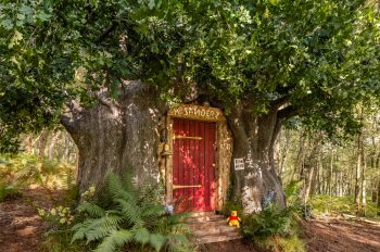 The entrance of the Winnie the Pooh Airbnb: red door surrounded by trees